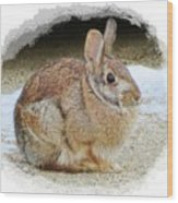 March Rabbit With Vignette Wood Print