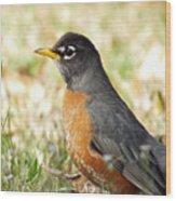 March Robin Wood Print