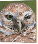 Marco Burrowing Owl - I Know What You're Thinking Wood Print
