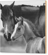 Mare And Foal In Black And White Wood Print
