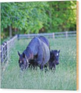 Mare And Foal In Shadows Wood Print