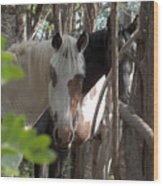 Mares In Trees Wood Print