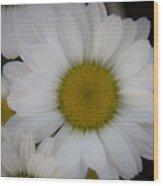 Marguerite Daisies Wood Print