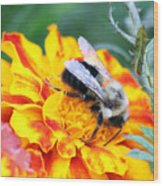 Marigold And The Bee Wood Print