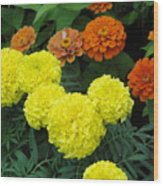 Marigold And Zinnias Wood Print