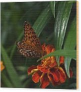 Marigold Grows Wings Wood Print