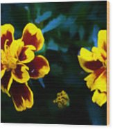 Marigold In Living Color Wood Print