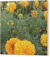 Marigold Light Wood Print