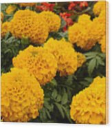 Marigold Party Wood Print