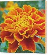 Marigold Photograph Wood Print