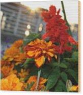 Marigold Sunshine Wood Print