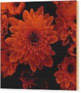 Marigolds In Orange Light Wood Print