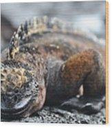 Marine Iguana  Wood Print