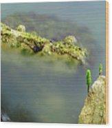 Marine Life On Exposed Concrete Debris Wood Print