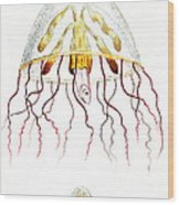Marine Mollusc Divulging Fish Wood Print