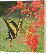 Mariposa Amazonica Wood Print