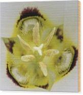 Mariposa Lily 3 Wood Print