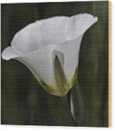 Mariposa Lily 6 Wood Print