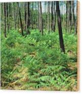 Maritime Pine Trees Wood Print