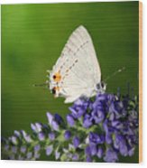 Marius Hairstreak Butterfly Wood Print