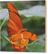 Marmalade Delight Wood Print