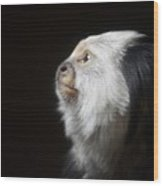Marmoset Thoughts Wood Print by Stephanie Varner