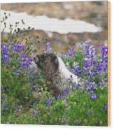 Marmot In The Wildflowers Wood Print