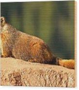 Marmot Life Wood Print