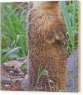 Marmot Love Wood Print