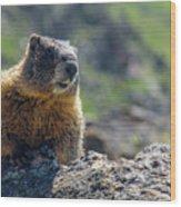 Marmot On The Ridge Wood Print