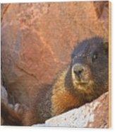 Marmot On The Rocks Wood Print