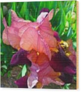 Maroon Iris Flower Wood Print