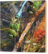 Married With Children Dragonflies Mating Wood Print