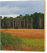 Marsh And Trees Wood Print