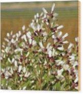Marsh Blooms Wood Print