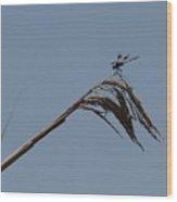 Marsh Dragonfly Wood Print