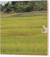 Marsh Egrets Wood Print