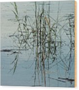 Marsh Grass Wood Print