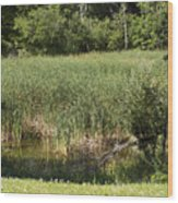Marsh Grass Wood Print