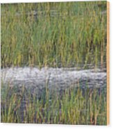 Marsh Grasses Wood Print
