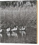 Marsh Hunters Wood Print