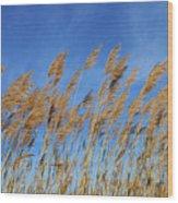 Marsh In The Wind Wood Print
