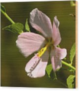 Marsh Mallow Wood Print