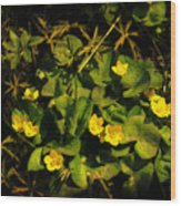 Marsh Marigolds Wood Print