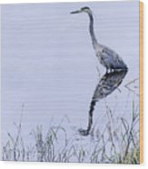 Marsh Reflections - Great Blue Heron Wood Print