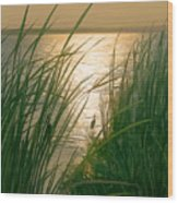Marsh Sunset Wood Print