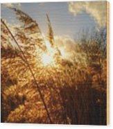 Marsh Sunset Wood Print