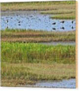 Marsh Tide Pool Wood Print
