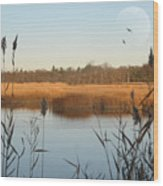 Marshland Wood Print by Diana Lee Angstadt
