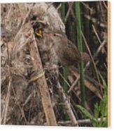 Marshy Nest Wood Print